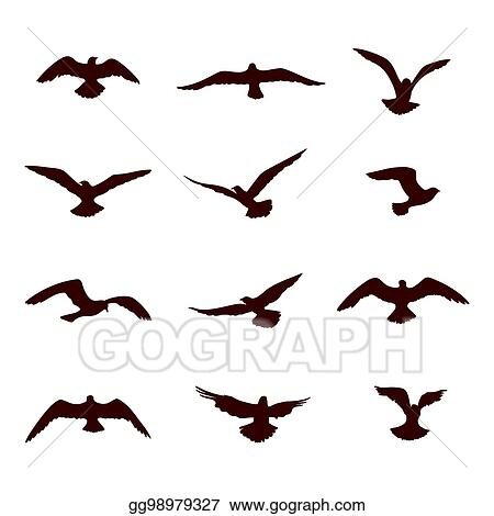 Drawings Bird Flying Silhouette Set Wildlife Icon Collection