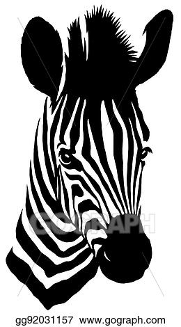 Stock Illustration Black And White Linear Paint Draw Zebra