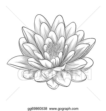 EPS Illustration - Black and white lotus flower painted in graphic ...