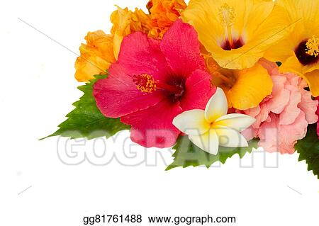 Stock Image Border Of Colorful Hibiscus Flowers Stock Photo
