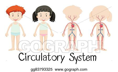 Vector Art Boy And Girl With Circulatory System Diagram Clipart