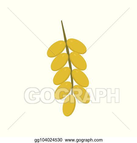 Dates Palm Tree Fruit Clip Art - Royalty Free - GoGraph