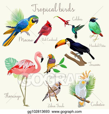 Birds tropical. Vector illustration bright color