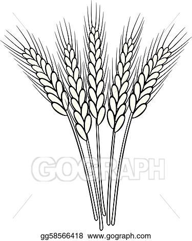 Wheat Head Clip Art at Clker.com - vector clip art online, royalty free &  public domain