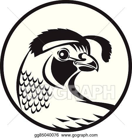 vector art california valley quail circle black and white clipart