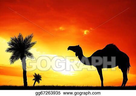 Drawings - Camel in the desert  Stock Illustration