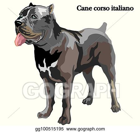 Vector Illustration Cane Corso Italiano Vector Illustration Eps Clipart Gg100515195 Gograph