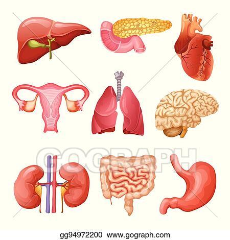 Vector Art Cartoon Human Organs Set Clipart Drawing Gg94972200