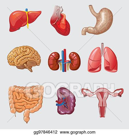 Vector Art Cartoon Human Organs Set Clipart Drawing Gg97846412
