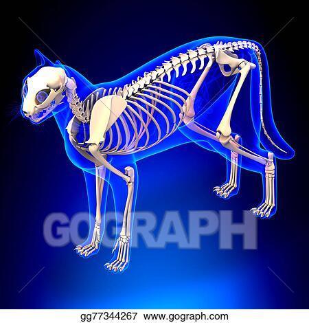 Clip Art Cat Skeleton Anatomy Anatomy Of A Cat Skeleton