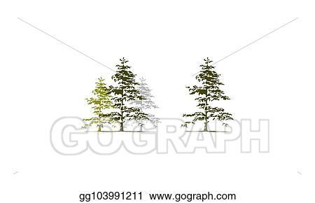 Vector Art Cedar Tree Template Set Clipart Drawing