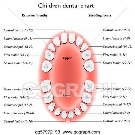Vector Illustration Children Dental Chart Stock Clip Art