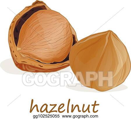 Vector Art Closeup Of Hazelnuts Isolated On The White