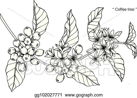 Clip Art Vector Coffee Tree Drawing And Sketch With Black And