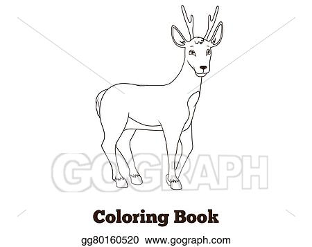 Vector Art Coloring Book Forest Animal Roe Deer Cartoon Clipart