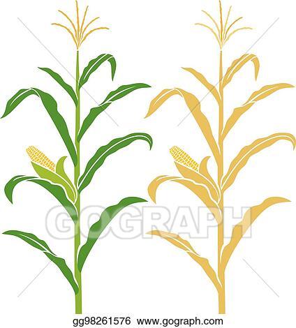 vector stock corn stalk vector illustration clipart illustration rh gograph com Corn On the Cob Clip Art Funny Corn Clip Art