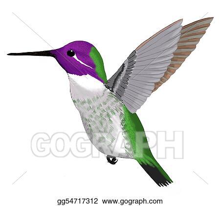 stock illustration costas hummingbird clipart drawing gg54717312 rh gograph com hummingbird clipart pictures hummingbird clipart pictures