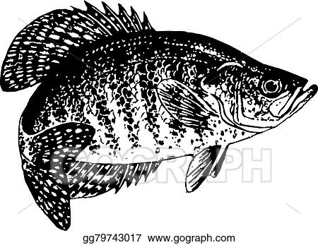 eps illustration crappie vector vector clipart gg79743017 gograph rh gograph com Bass Clip Art Fish Outline Clip Art