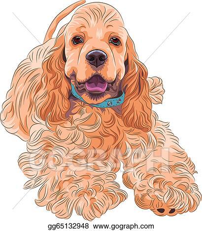 vector illustration cute sporting dog breed american cocker