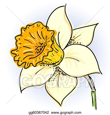 daffodil clip art royalty free gograph rh gograph com daffodil clip art free download daffodil clip art free download