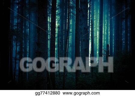 Stock Photo - Dark creepy forest  Stock Photos gg77412880