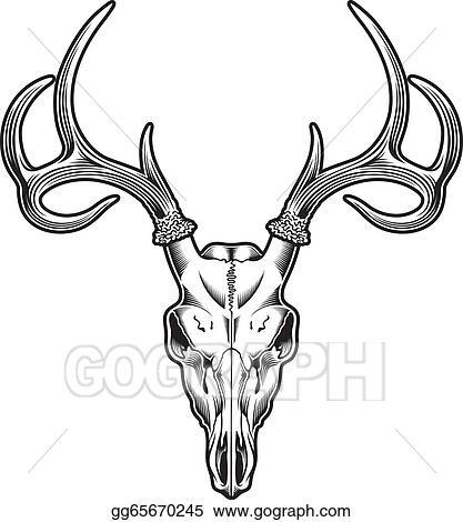 clip art vector deer skull vector stock eps gg65670245 gograph rh gograph com buck deer skull clipart Deer Skull Clip Art Graphics