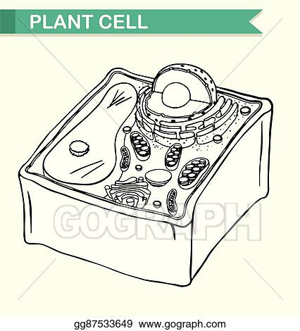 Vector art diagram showing plant cell clipart drawing gg87533649 diagram showing plant cell ccuart Gallery