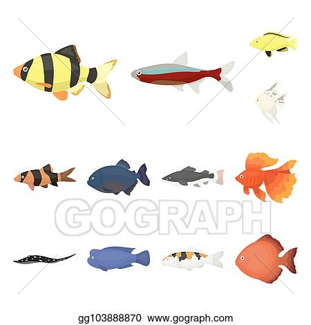 vector illustration different types of fish cartoon icons in set