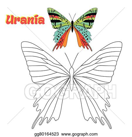 Educational Game Coloring Book Butterfly Vector