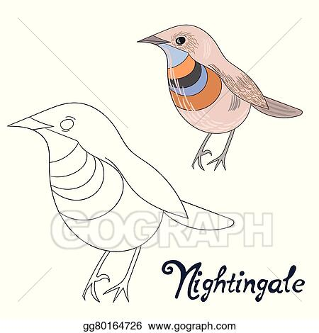 Educational Game Coloring Book Nightingale Bird