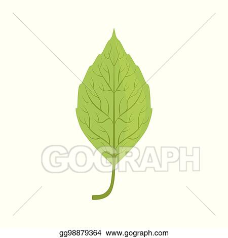 Eps Illustration Elm Tree Green Leaf Vector Illustration Vector