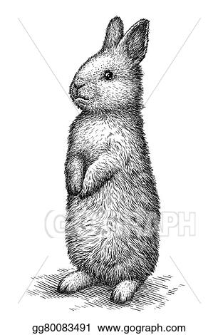 drawings engrave rabbit illustration stock illustration