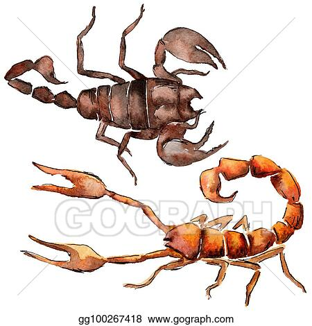 cfd3859c44524 Stock Photos - Exotic scorpion wild insect in a watercolor style ...