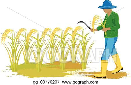 Sickle and Harvesting Rice Images, Stock Photos & Vectors | Shutterstock