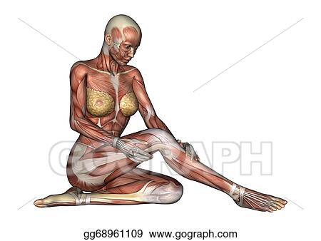 Stock Illustration - Female anatomy figure. Clipart Illustrations ...