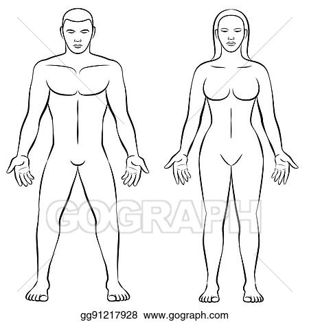 EPS Vector - Female body shape male body mass illustration