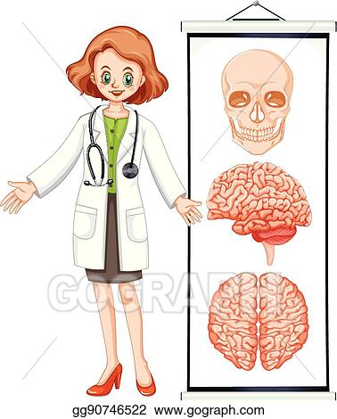 vector art female doctor and brian diagram clipart domain model class diagram of hospital diagram of doctor #9