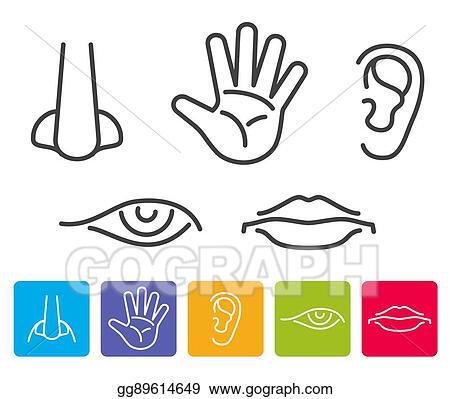 vector stock five human senses smell sight hearing taste touch rh gograph com five senses clip art preschool five senses clip art preschool