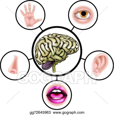 vector stock five senses brain stock clip art gg72645963 gograph rh gograph com five senses clipart png five senses clipart images