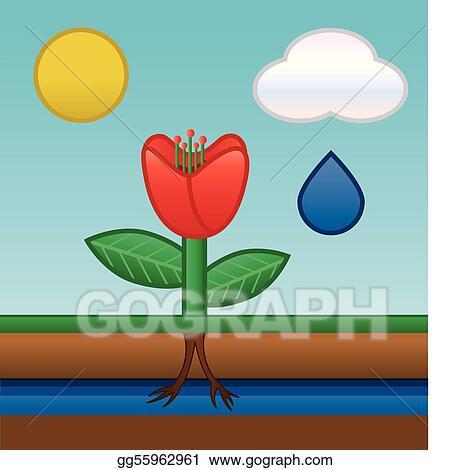 vector illustration flower water absorbing stock clip art