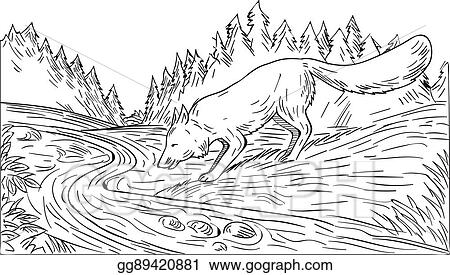 vector art fox drinking river woods black and white drawing clipart drawing gg89420881 gograph https www gograph com clipart license summary gg89420881