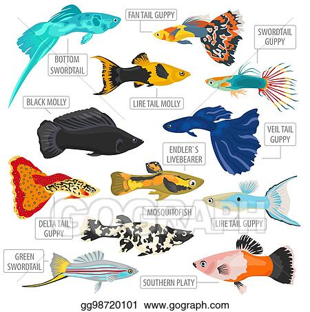 Clip Art Vector Freshwater Fishes Breeds Icon Set Flat Style