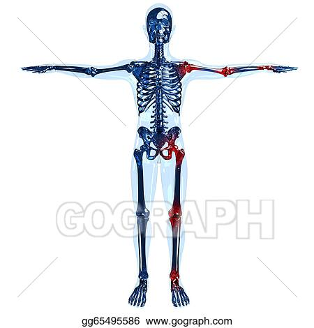 Stock Illustration - Full human skeleton 3d concept with