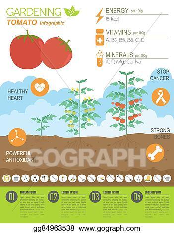 vector clipart gardening work farming infographic tomato