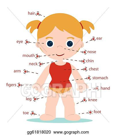 Body Parts Clip Art - Royalty Free - GoGraph