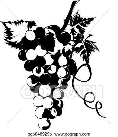 vector clipart grapes in vines with leaves vector illustration