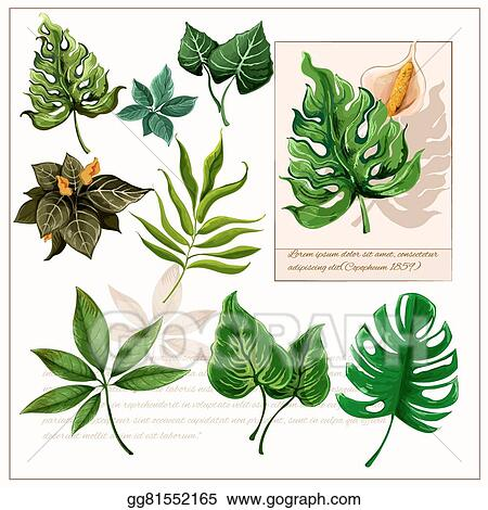 Eps Vector Green Tropical Leaves Pictograms Set Stock Clipart Illustration Gg81552165 Gograph 450x470 tropical leaves, floral elements, vector amp photo bigstock. green tropical leaves pictograms set