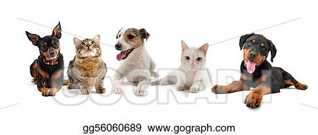 Stock Photos Group Of Puppies And Cats Stock Images Gg56060689