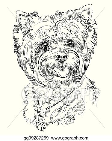 Biewer Terrier Dog Breed Pictures, Characteristics, & Facts | 470x374