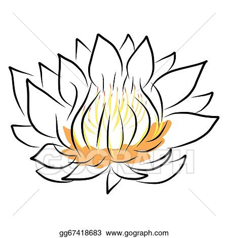 eps illustration hand drawing water lily lotus flower vector rh gograph com Blue Lily Flower Tiger Lily Clip Art